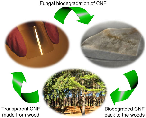 wood-computer-chip-cellulose-nanofibril