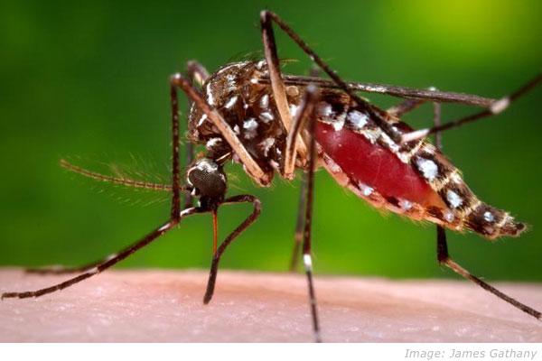 google-zika-virus