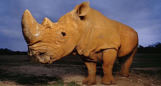 Rhino-Saving Tech Also Could Protect Kids and Borders